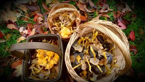 Sienimetsällä