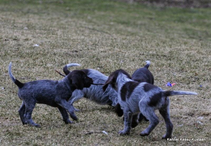 Puppies, puppies! :)